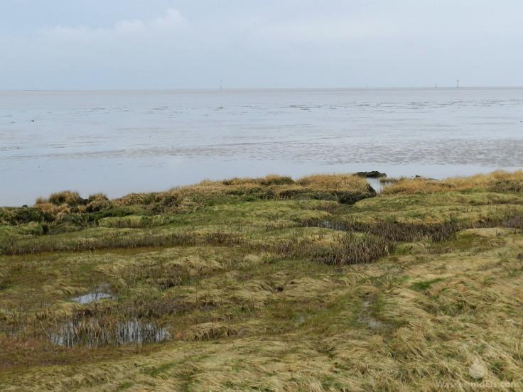 Salzwiese Schottwarden Wurster Nordseeküste