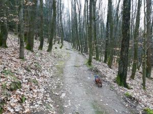 Jägersteig Bruchhauser Steine