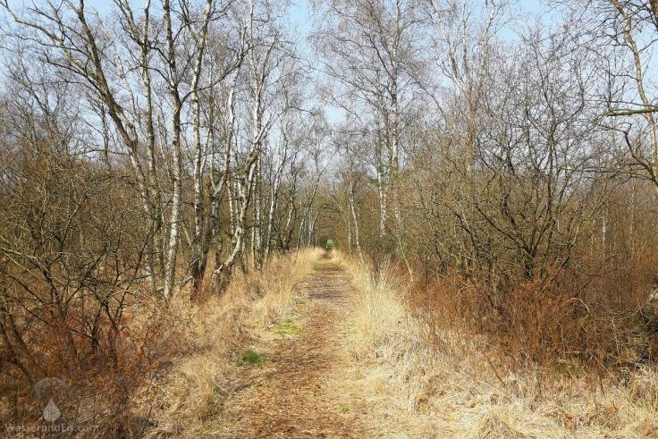 Wanderweg Dorumer Moor Sievern