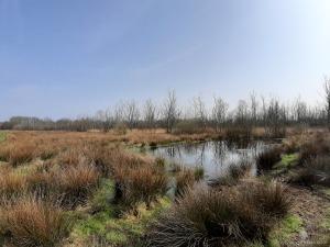 Dorumer Moor