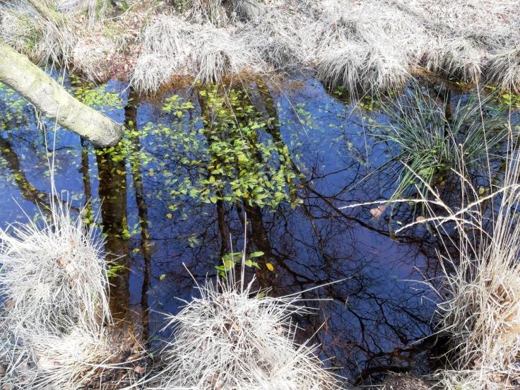 Hochmoor Moorwasser Sievern