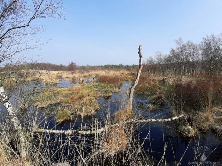 Moorbirke Sumpf Dorumer Moor