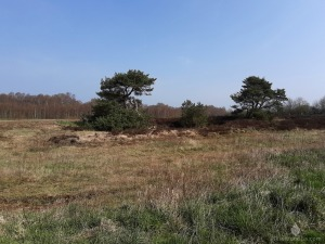 Heide Dorumer Moor Heidehof Geestland