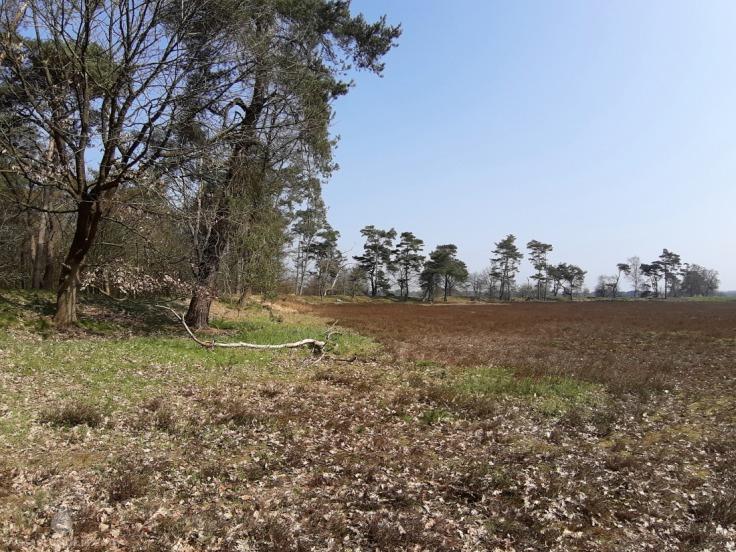 Heidenstadt Sievern Geestland Dorumer Moor