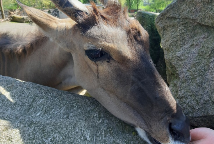 #Tierpark Hamm Elen-Antilope