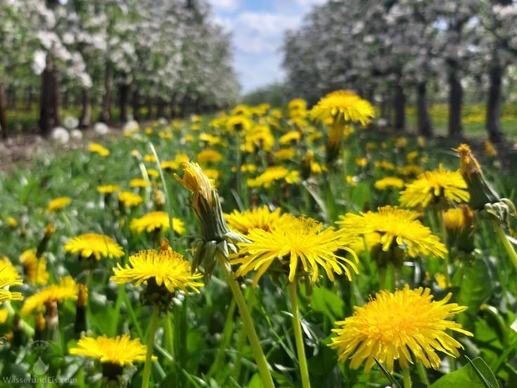 Frühling Altes Land