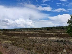 Wesler Heide in der Nordheide.