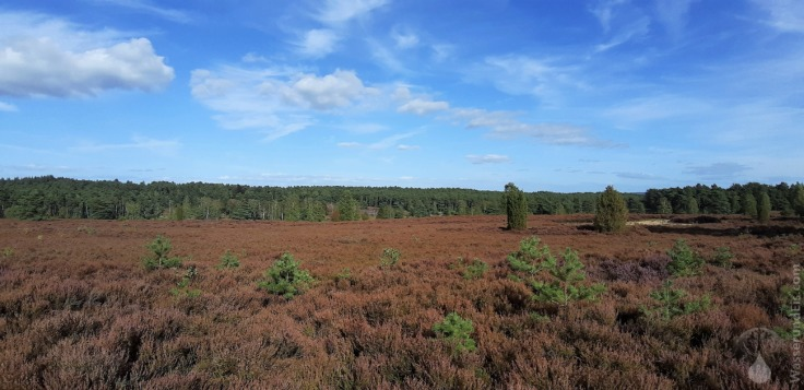#Büsenbachtal Lüneburger Heide
