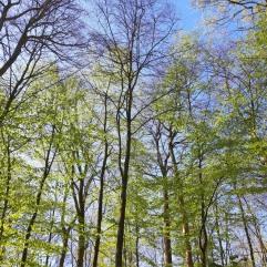 #Ergrünender Wald 2020