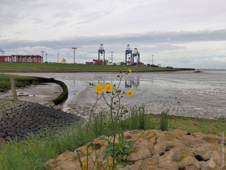 #Weddewarden Containerhafen Grauwallkanal