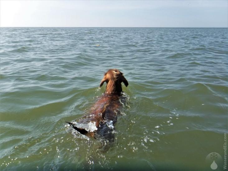 So ein Bad im Meer tut auch dem Vierbeiner sehr gut - auch wenn das Wasser eklig schmeckt...