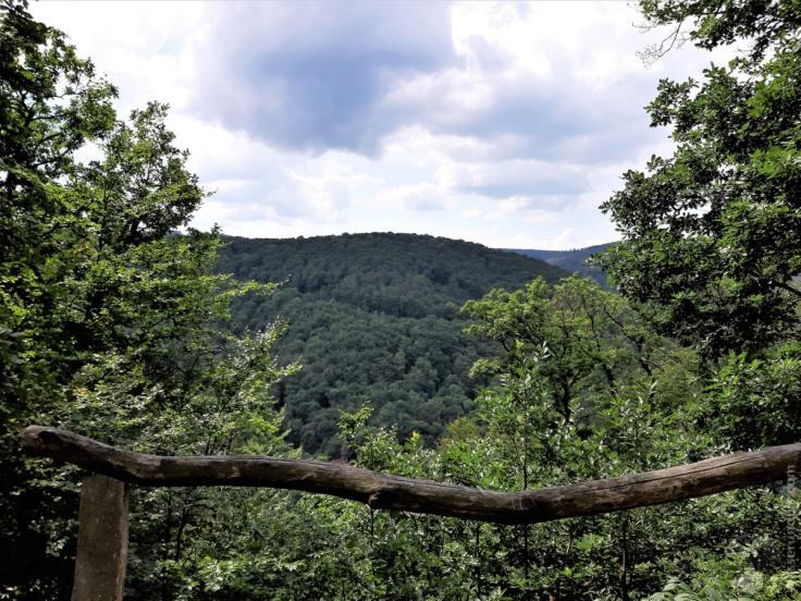 Blick vom Hang des Burgbergs über das Kaltetal zum Ettersberg. Hier kommen wir auf dem Rückweg vorbei.